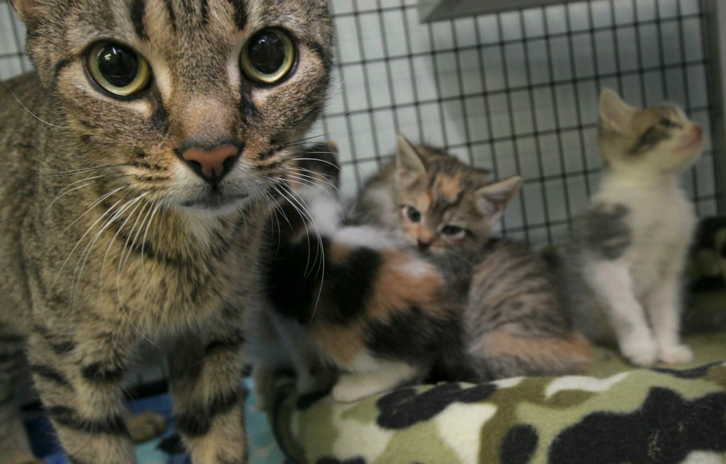 19 evicted cats in need of homes in Tucson | Local news